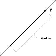 vector module